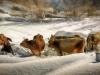 """Cow girl"" Beretta Lella EFIAP/s, Vercelli (VC)"