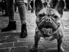 Dogs-n-1Borella-Aurelio-Idelfonso-AFIAPGarbagnate-MilaneseMI-G.F.-Garbagnese