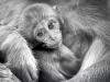 "Brega Giulio-""Little monkey""-2019"
